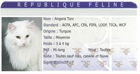 races chat angora turc