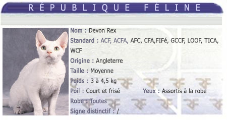 races chat devon rex